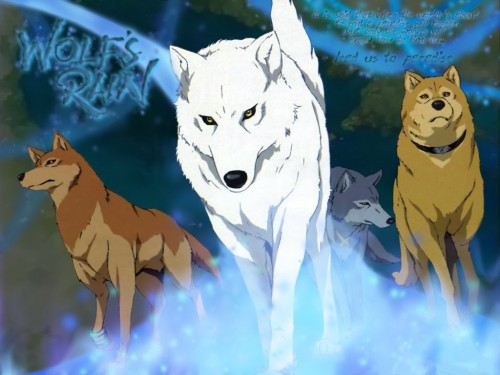 BONES, Wolf's Rain, Hige, Kiba (Wolf's Rain), Toboe Wallpaper