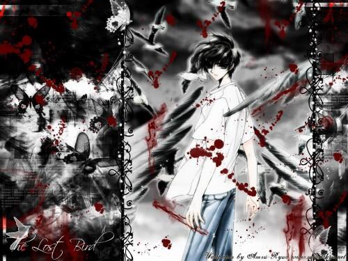 CLAMP, Madhouse, X, Kamui Shirou Wallpaper