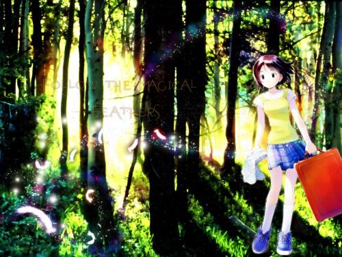 Kumichi Yoshizuki, J.C. Staff, Someday's Dreamers, Yume Kikuchi, Magic Wallpaper