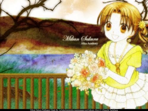 Tachibana Higuchi, Gakuen Alice, Mikan Sakura, Mr. Bear Wallpaper
